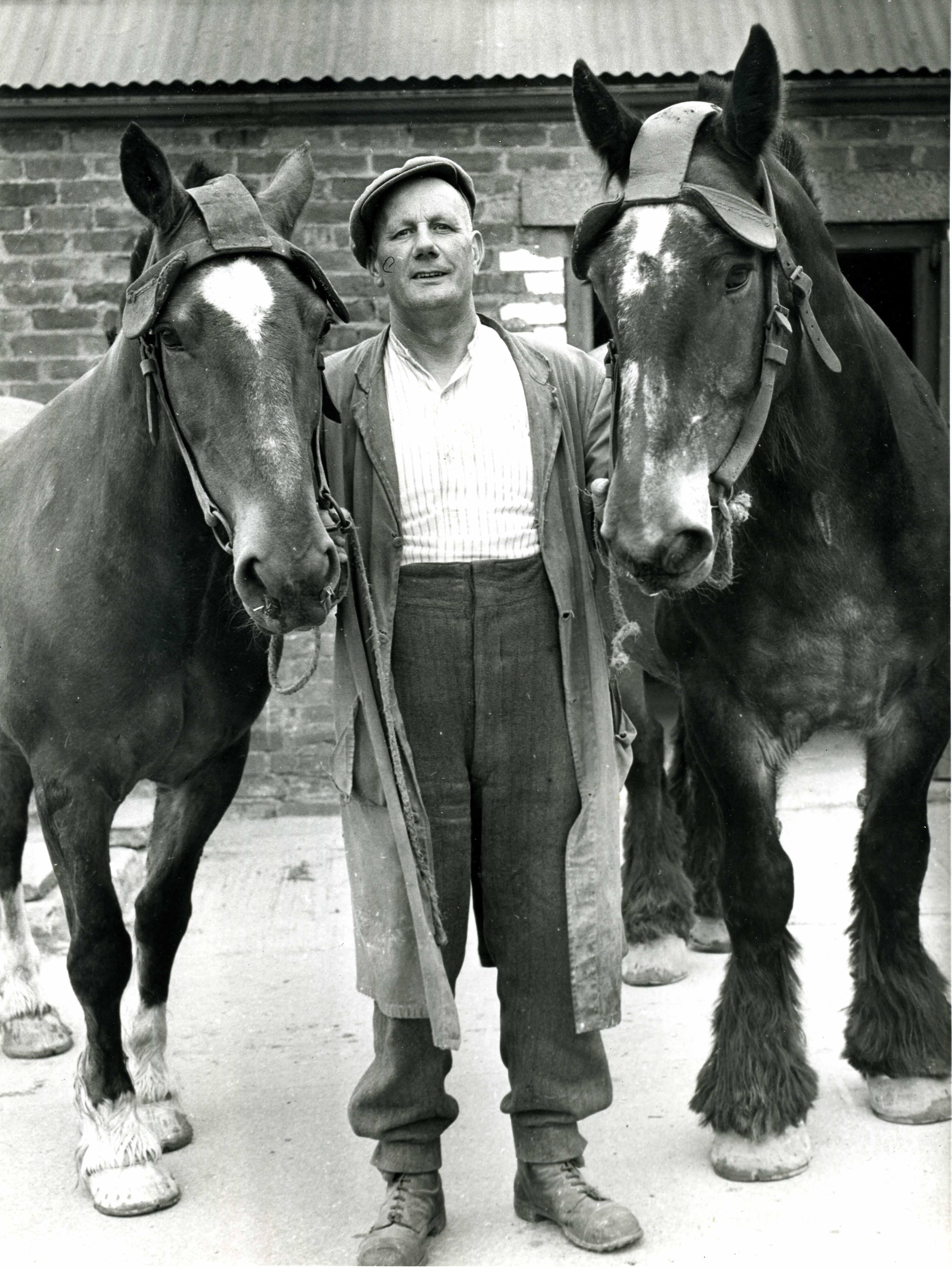 Ponies and Pony Man