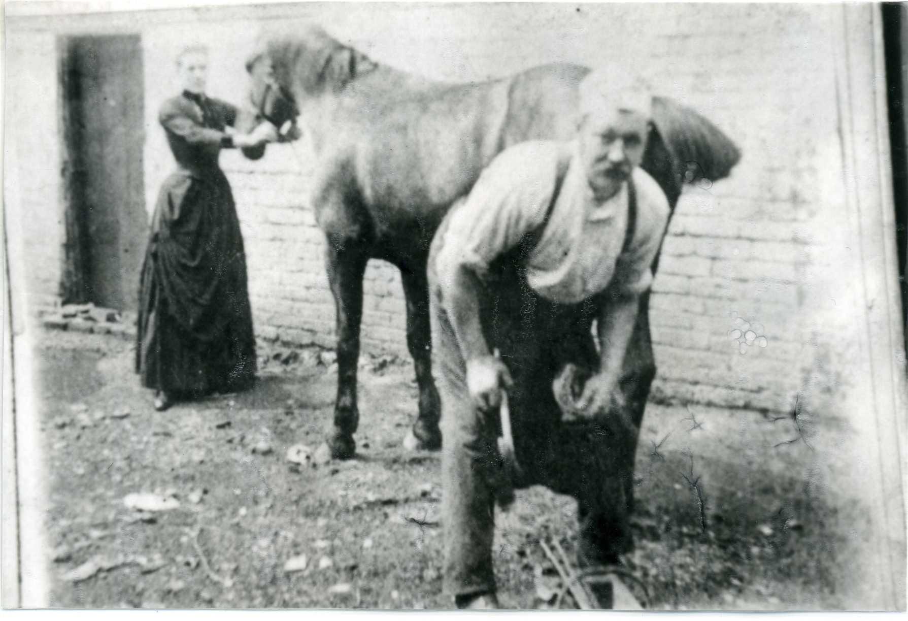 Horse Shoeing
